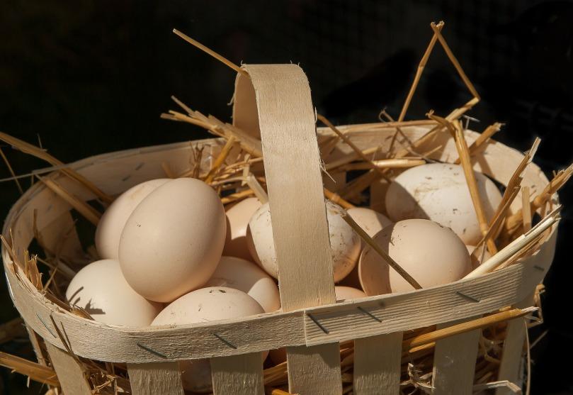eggs-3585394_1920.jpg